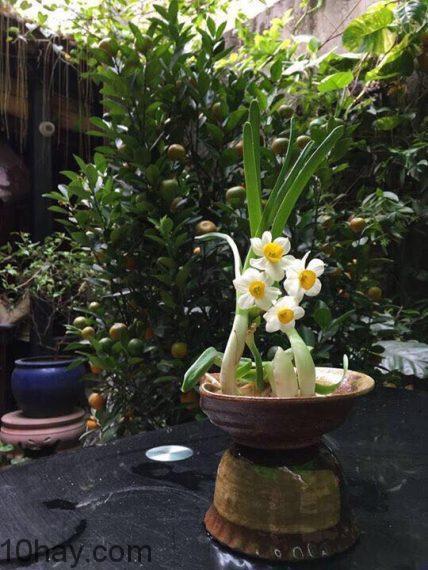 Cây hoa thủy tiên được làm theo yêu cầu của khách. Sản phẩm đầy tinh tế, nghệ thuật