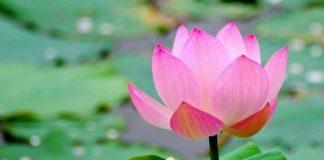 loài hoa đẹp