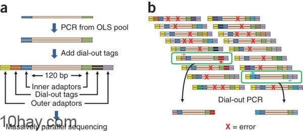 Sinh học phân tử (PCR)