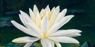 10 loài hoa đẹp