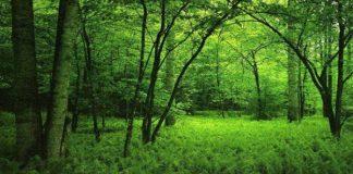 rừng đẹp nhất trên thế giới