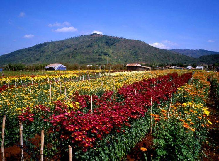 """Vườn hoa Tân Thành Top 10 địa điểm chụp hình """"free"""" cực chất ở Đà Lạt"""