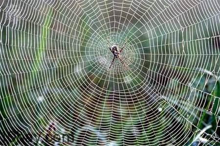 Tơ nhện