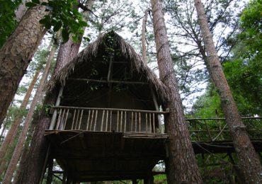 Khách sạn trên cây (Đà Lạt)