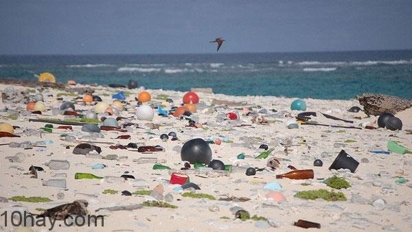 Môi trường biển ô nhiễm