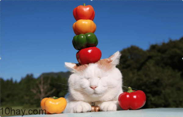 mèo nổi tiếng nhất thế giới