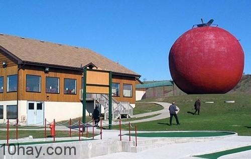 táo khổng lồ