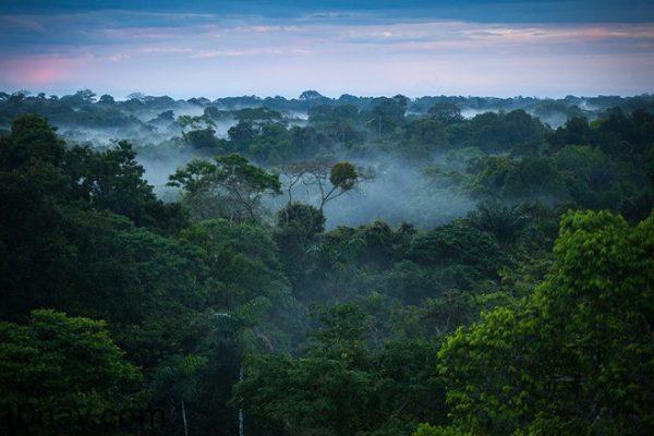 Nhung dieu bi an trong rung Amazon