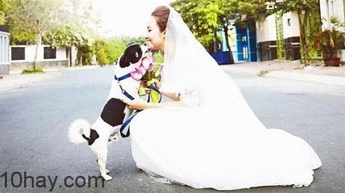 Cô dâu kết hôn với động vật