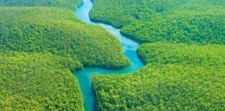 Những điều bí ẩn trong rừng Amazon