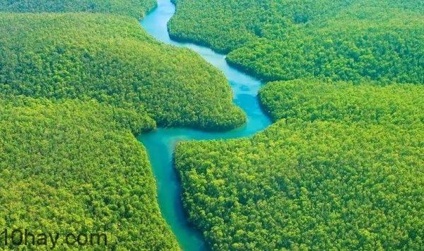 Dien tich rung Amazon tuong duong chau Uc