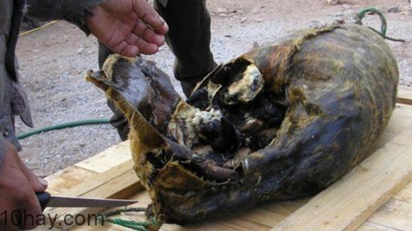 Hải cẩu nhồi chim chết