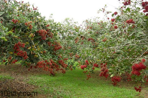 Vườn Long Khánh