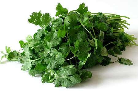 Các loại thảo mộc và rau gia vị tươi