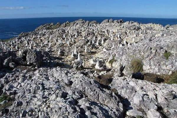 Đảo Albatross, Australia