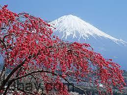 Những lợi ích của việc học tiếng Nhật
