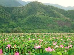 Mùa sen nở ở Hồ Quan Sơn