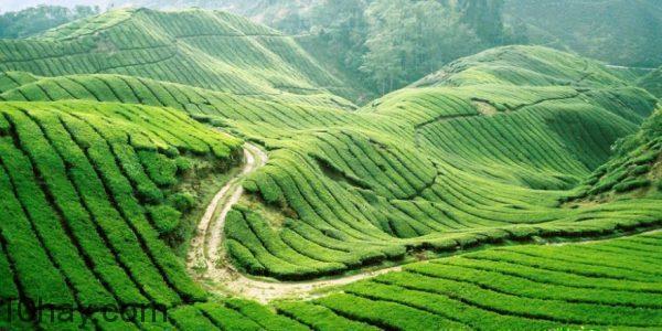 Kết hợp du lịch Mộc Châu (Sơn La)