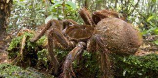 11 Loài nhện nguy hiểm nhất trên thế giới
