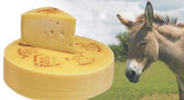 Phô mai được làm từ sữa của con lừa