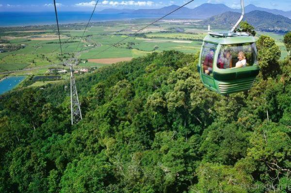Đi cáp treo để ngắm nhìn toàn cảnh rừng Gondwana
