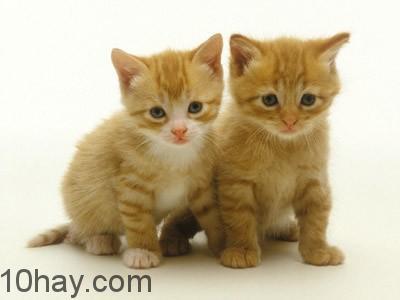 Lợi ích việc nuôi mèo