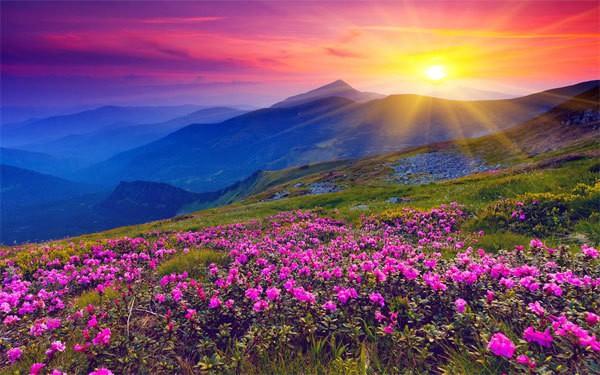 Thung lũng hoa ở Ấn Độ