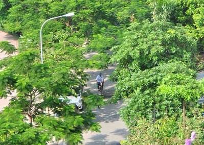 Đường Trịnh Công Sơn