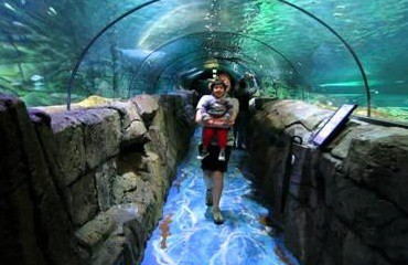 Bảo tàng hải dương học Sydney Aquarium