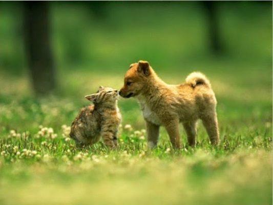Kiếm tiền bằng cách bán ảnh,bệnh có thể mắc phải khi nuôi chó mèo