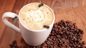 ong và cà phê