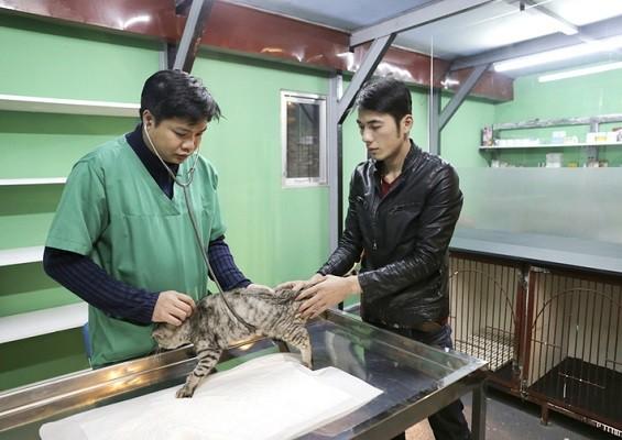 Phòng khám thú y Pet Health