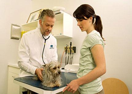 phòng khám thú y ở Đà Nẵng