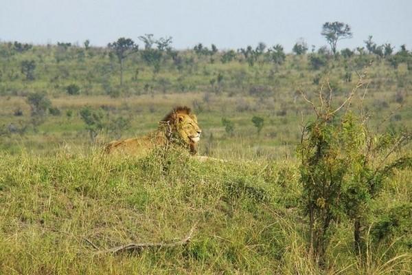 Vườn quốc gia Kruger