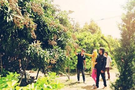 Vườn cây Cái Mơn