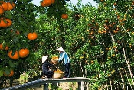 Vườn trái cây Tam Bình