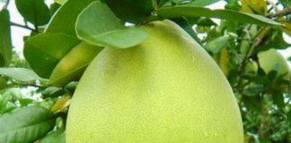 Trái cây đặc sản
