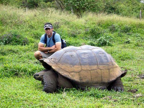 Một chú rùa khổng lồ