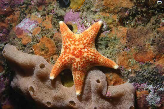 Con sao biển rất chậm chạp