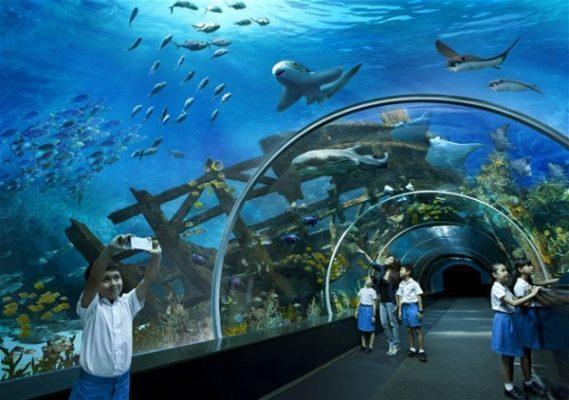Thủy cung S.E.A. Aquarium là thủy cung lớn nhất thế giới