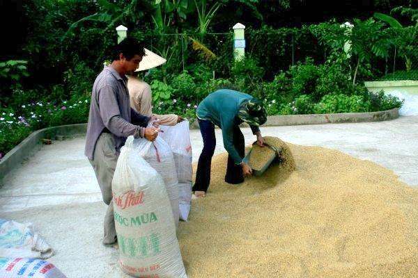 công ty xuất nhập khẩu gạo lớn nhất Việt Nam
