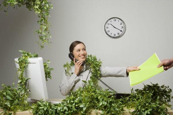 Công ty cho thuê cây xanh văn phòng tại TPHCM