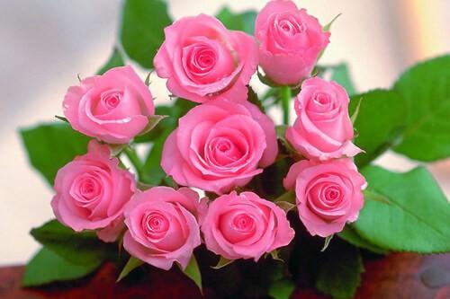 Những bó hoa tươi thắm cho ngày Phụ nữ Việt Nam