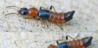 côn trùng độc nhất Việt Nam