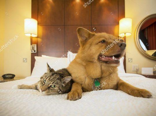 giữ chó mèo ngày tết hà nội