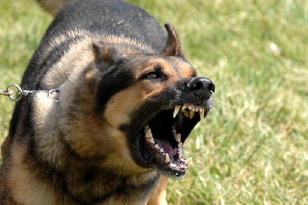 10 con vật nguy hiểm và cách thoát thân khi bị chúng tấn công