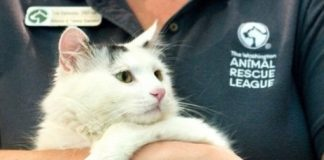 Dịch vụ trông giữ chó mèo ngày tết tại TPHCM