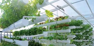dịch vụ trồng rau sạch tại nhà