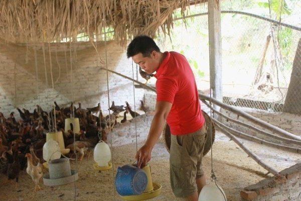 Anh Mạc Tuấn Hải chăm sóc cho đàn gà của trang trại
