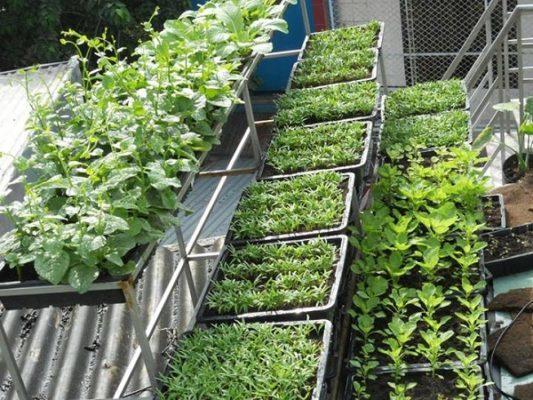 Top 10 dịch vụ trồng rau sạch tại nhà Đà Nẵng